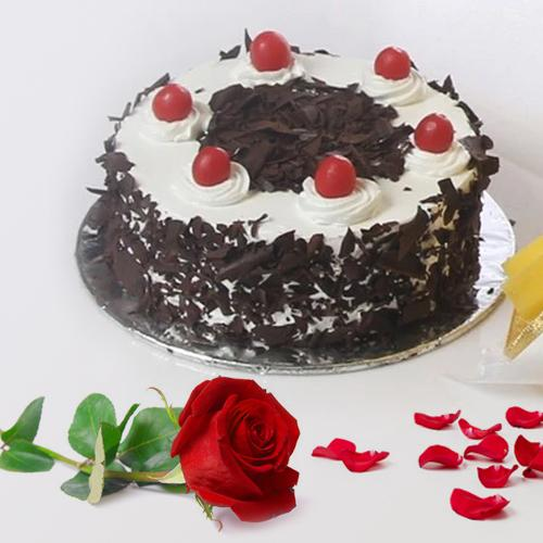 Delicate Black Forest Cake and a Fresh Red Rose