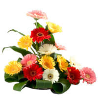 Flowers to India by India Florist