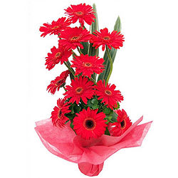 Magical Assemble of Gerberas in Red Colour