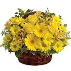 Colorful Pure Enchantment Yellow Flowers in a Basket