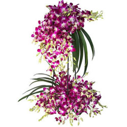 Fashionable Tall Arrangement of Thirty Orchid Stems