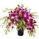 Elegant Touch of Love Orchids in Glass Vase