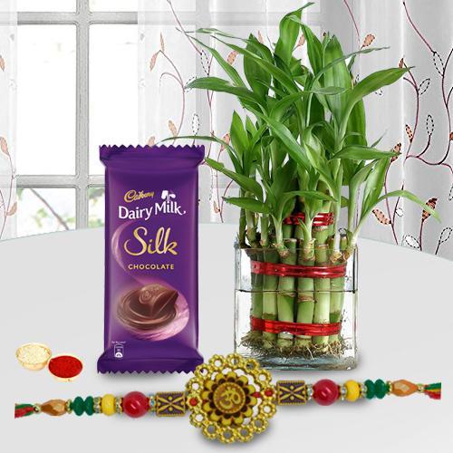 Lucky Bamboo Plant with Om Rakhi n Cadbury Silk Bar