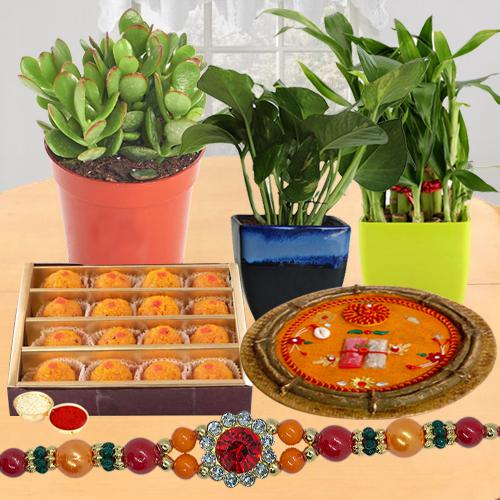 Eco Friendly Rakhi Gift for Brother