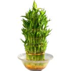 Special Three Tier Bamboo Plant in a Bowl to Chennai.