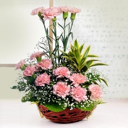 Mothers Day Pink Carnations Basket to Chennai